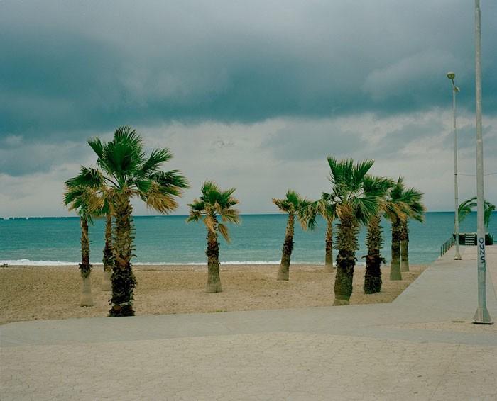small-palms